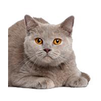 Kibbles Mill Cat