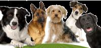 Kibbles Mill Dogs