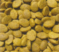 Large Breed Salmon and potato Puppy kibble