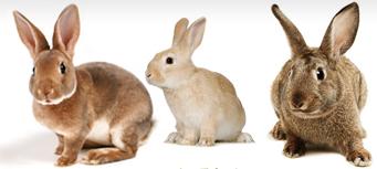 Premium-Rabbit-Pellets