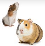 small_animals